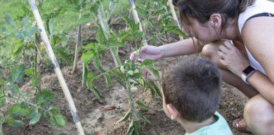 Huerto escolar: los beneficios de empezar a conectar con las raíces